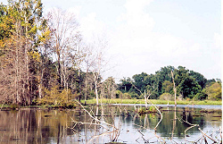 Timber on Snag Lake, 2003